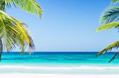 Tropical Seaside View And Palm Trees Over Turquoise Sea At Exotic Sandy Beach In Caribbean Sea poster