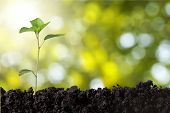 Seedling. poster