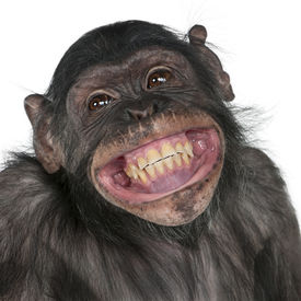 stock photo of chimp  - Close - JPG
