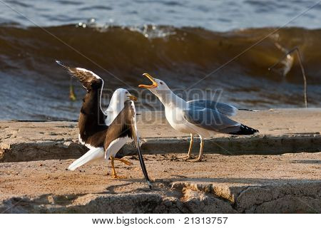 Dialogue Of Seagulls