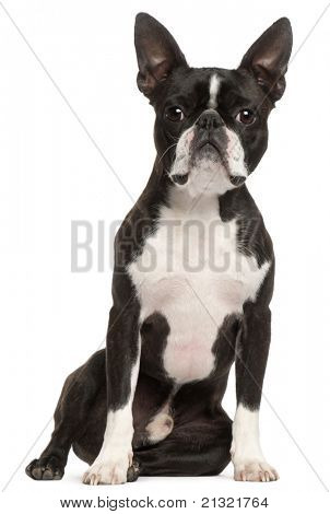 Boston Terrier, 1 year old, sitting in front of white background
