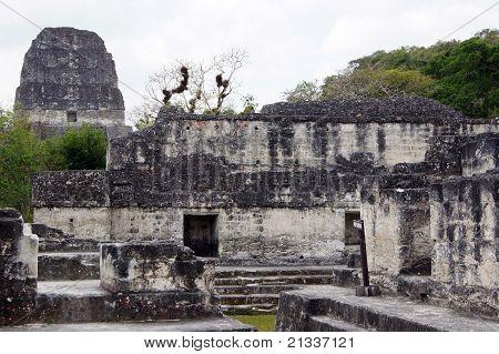 Ruins In Tikal