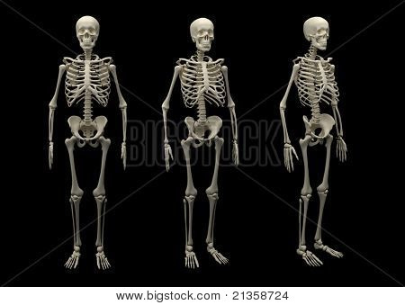 Skeleton of an adult is isolated on a black background