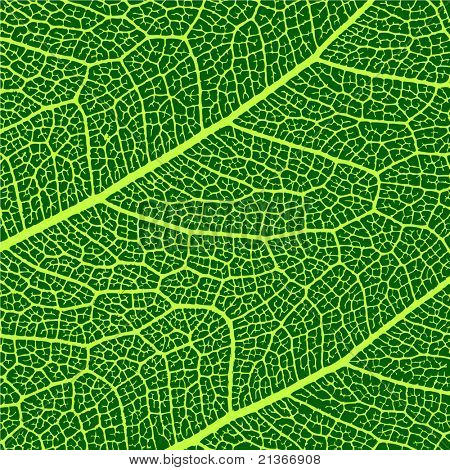 vector leaves macro texture