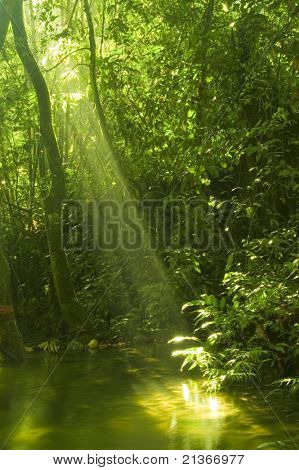 sunbeam in green forest with water reflection in morning