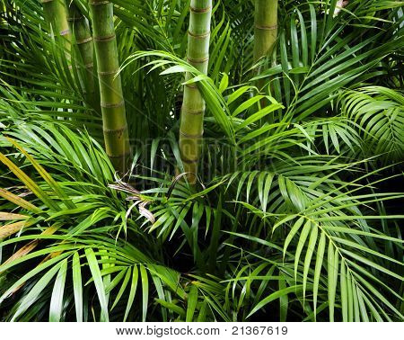 Landscape of tropical bamboo plant in garden