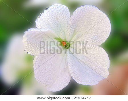 Diamante flower