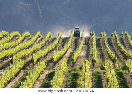 Vineyard Tractor, Okanagan