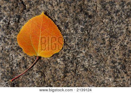 Autumn Aspen Leaf