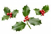 Christmas Holly With Red Berries. Traditional festive decoration. Holly branch with red berries on w poster