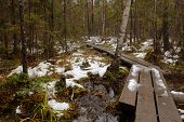 Footpath through a wetland in Nuuksio national park, Finland poster