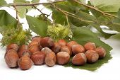 picture of cobnuts  - hazelnut  - JPG