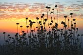 foto of stratus  - Field of plants with stratus clouds during sunset - JPG