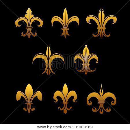 Golden Royal Lilies
