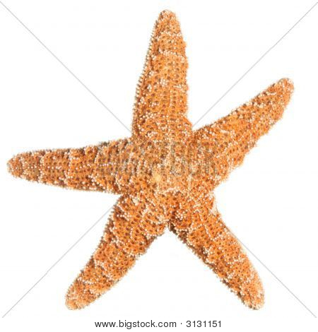 Sugar Starfish