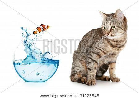 Gato olhando em um salto de peixe fora do aquário