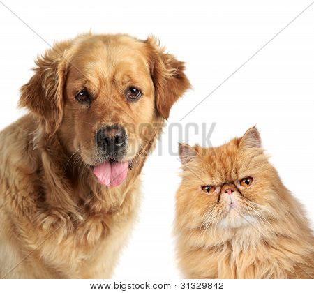 Dog And Ginger Cat On White Background
