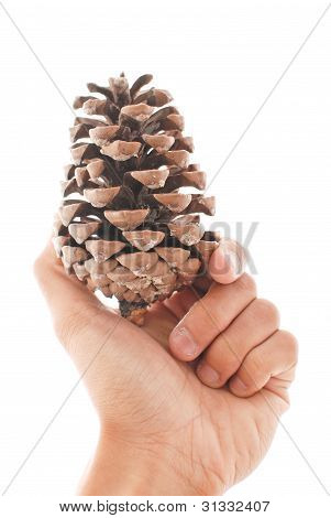 Hand Holding A Pin Cone Against White Background