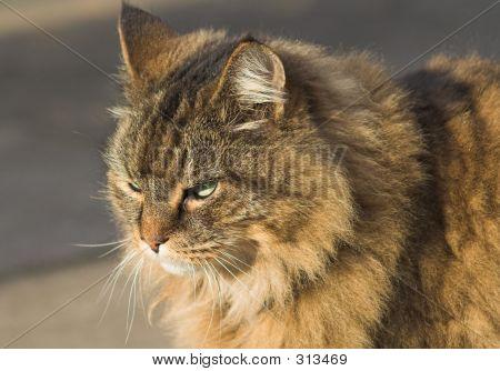 Cat Potrait 2
