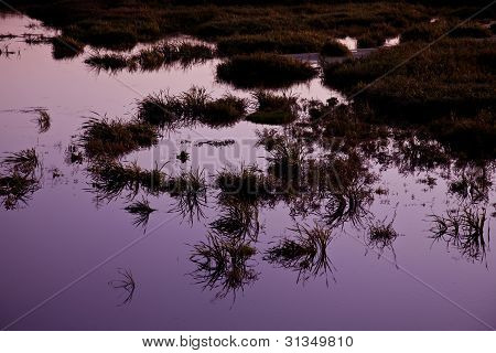 Medziboz Swamp 2