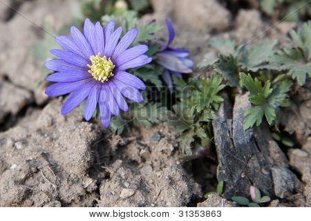 Flores en terrenos secos y agrietados