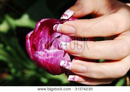 Lulling The Tulip