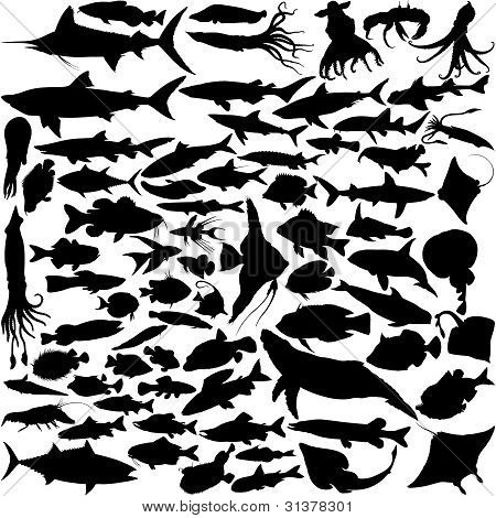 74 Vector Silhouettes of fish