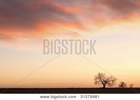 Three Trees Sunrise Sky Landscape