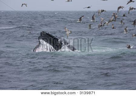 Whale Mouth Breach