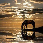 stock photo of running horse  - Photo of drinking horse on sundown