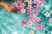 Hands Over The Pool With Flowers. Tropical Flowers Frangipani Plumeria, Leelawadee Floating In The W poster