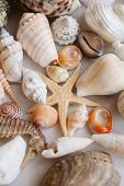 Seashells And Starfish Background. Many Different Seashells Piled Together. Ocean Life. Beautiful Se poster