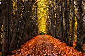 Autumn Park Alley. Bright Autumn Trees And Orange Autumn Leaves. Autumn Landscape. Yellow Autumn Tre poster