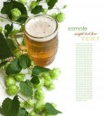 image of hop-plant  - Beer and hop isolated on a white background - JPG