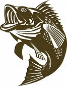 foto of bass fish  - Vector art on animals and wildlife creatures - JPG