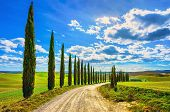 Italian Cypress Trees Rows And A White Road Rural Landscape. Siena, Tuscany, Italy, Europe. poster