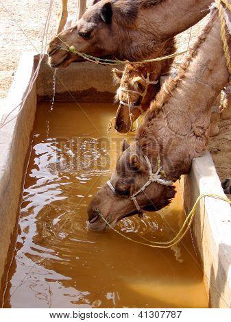 camel water tank