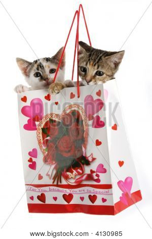 Kittens In A Bag