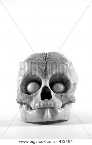 Animal Skull