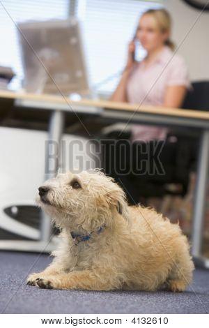 Cão deitado no escritório de casa com a mulher em segundo plano