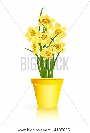 Spring Gardening. Yellow Narcissus Flowers In Pot