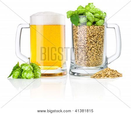 Two Mug: Fresh Beer And Full Of Barley Hops, Isolated On White Background