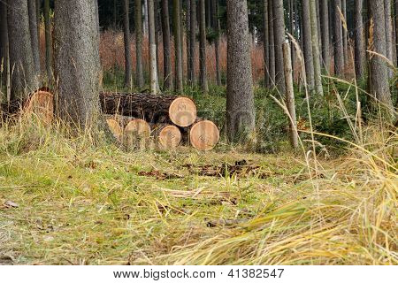 Pile Of Wood In Forest Grass