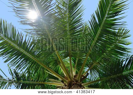 Palm Tree And Sun Light