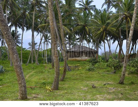 Shack In The Jungle
