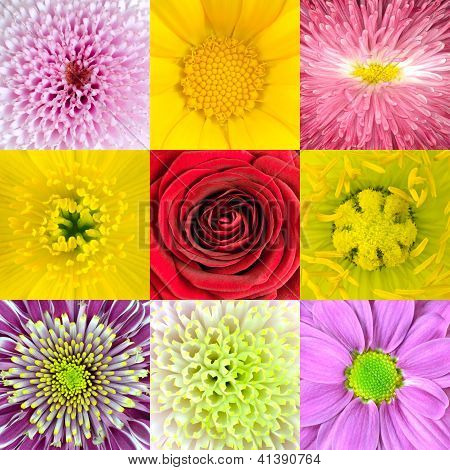 Collection Of Nine Various Flowers Macros