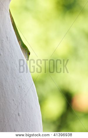 Cute Cerf Gecko 4 - Vertical