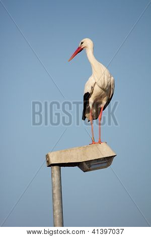 Stork On A Streetlamp 5