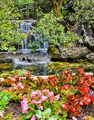 foto of begonias  - Waterfall And Flowers Blooming In The Garden - JPG