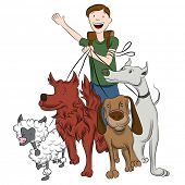pic of dog-walker  - An image of a man walking dogs - JPG
